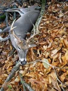 ARKANSAS DEER HUNTING