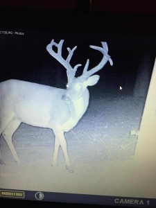 GREENE COUNTY BUCK